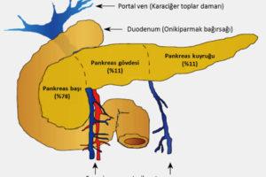 pankreasca2